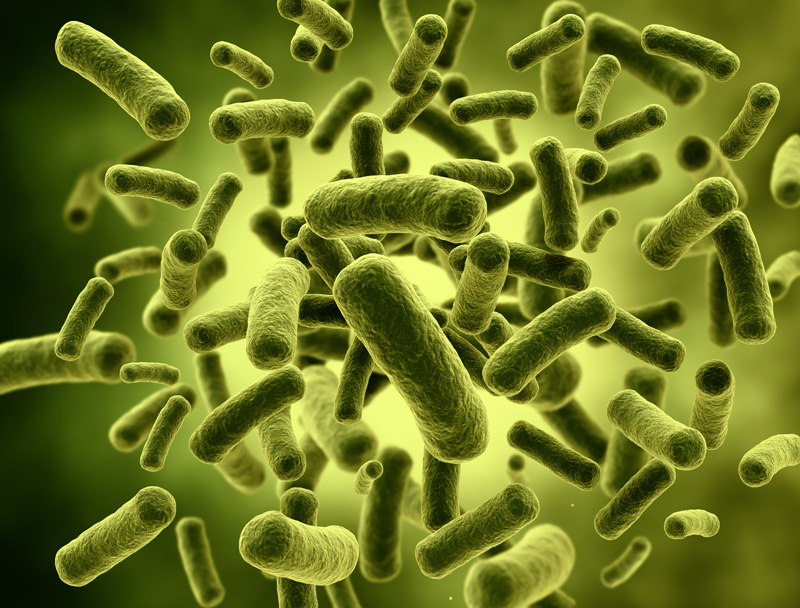 lactobacillus acidophilus la-101 – mystical biotech, Skeleton